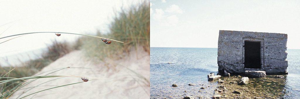 …from Denmark to Estonia, along the shores